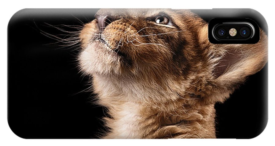 Love IPhone X Case featuring the photograph Little Lion Cub In Studio On Black by Ekaterina Brusnika