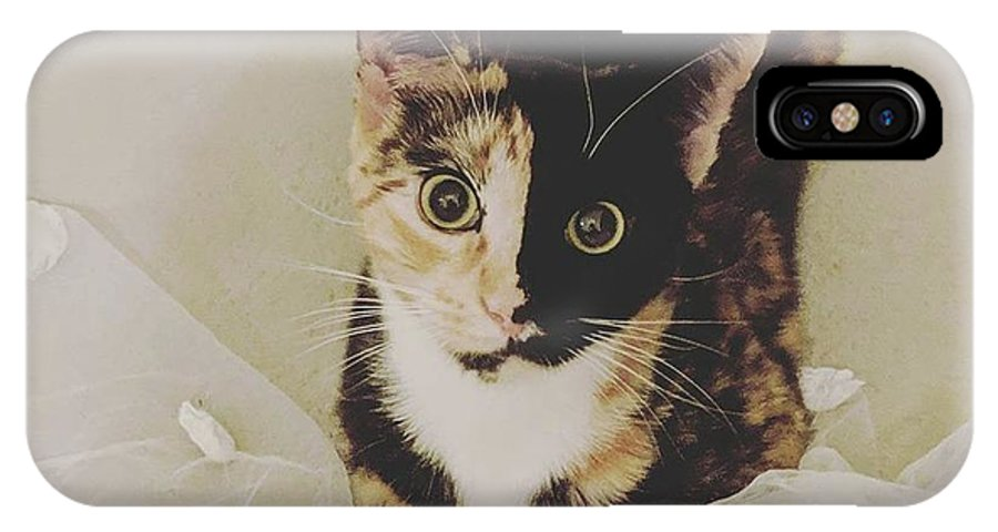 Cute Cat IPhone X Case featuring the photograph Meet Star by Star And Ray