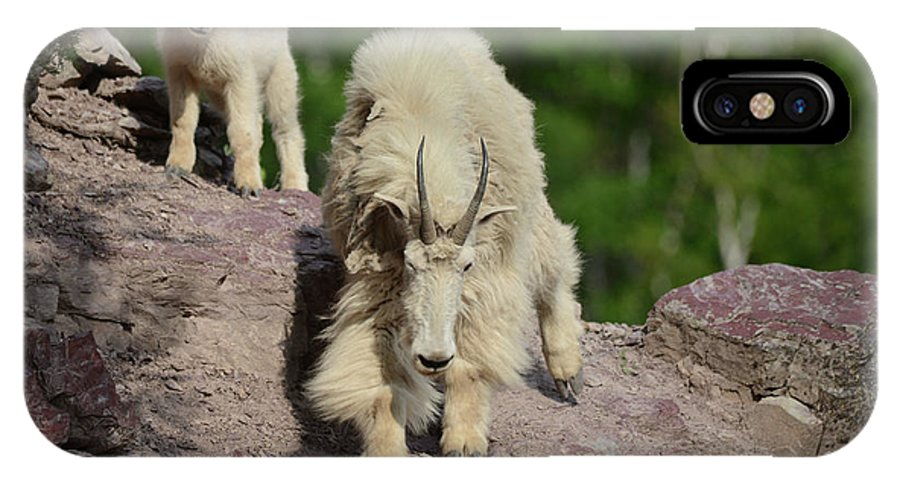 Mountain Goats IPhone X Case featuring the photograph Mountain Goats- Nanny And Kid by Whispering Peaks Photography