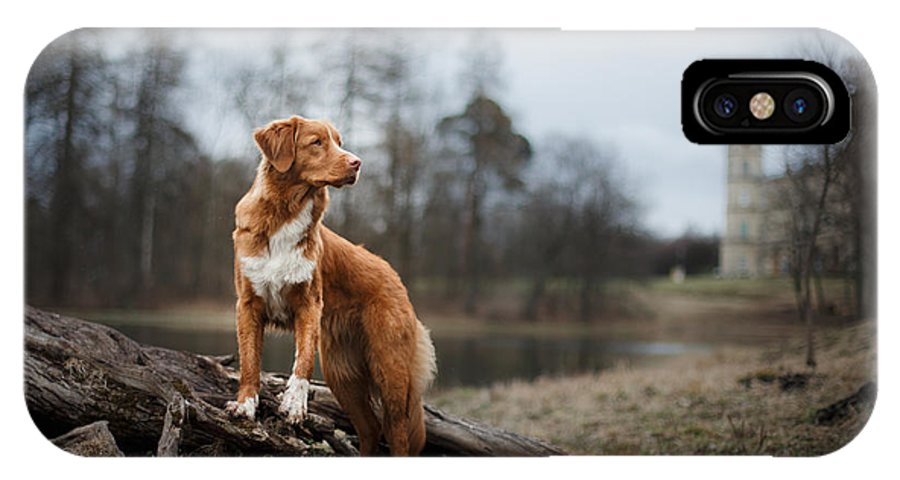 Small IPhone X Case featuring the photograph Nova Scotia Duck Tolling Retriever Dog by Dezy