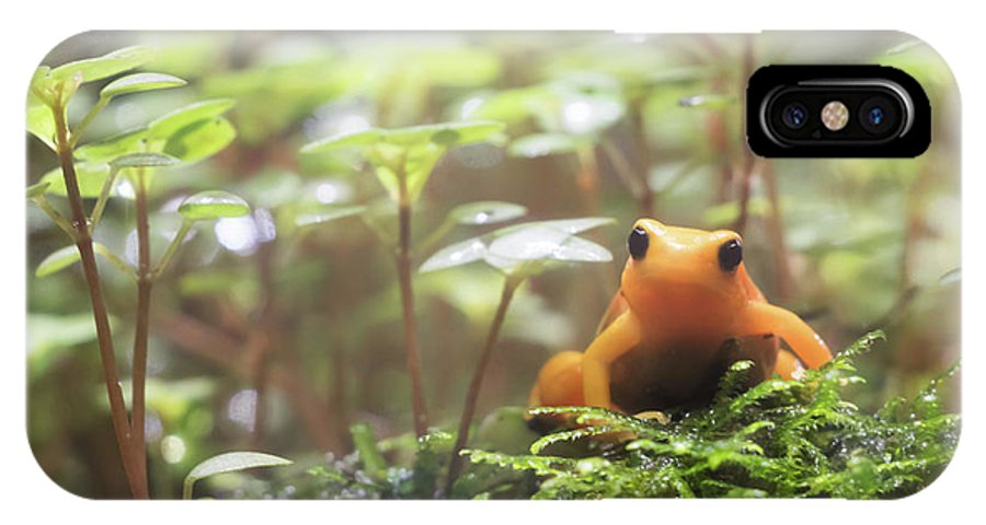 Frog IPhone X Case featuring the photograph Orange Frog. by Anjo Ten Kate