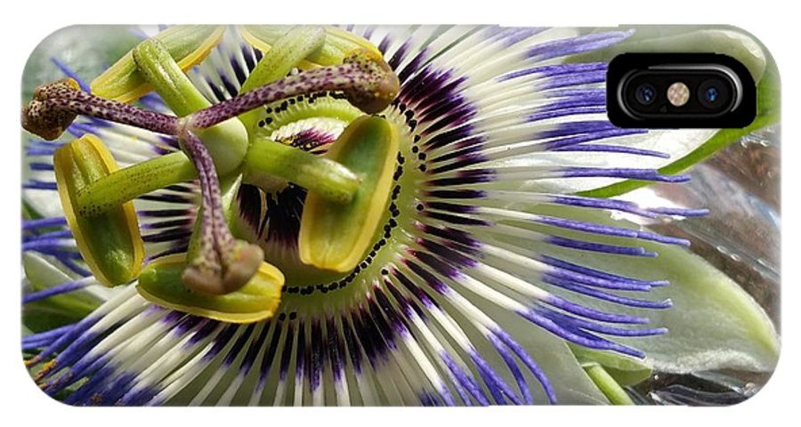 IPhone X Case featuring the photograph Passionflower by Paola Baroni
