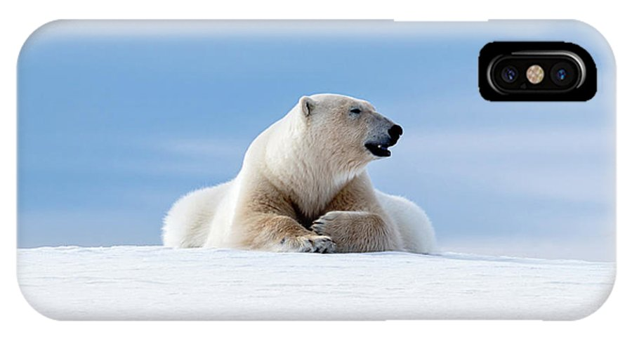 Polar IPhone X Case featuring the photograph Polar Bear Laying On The Frozon Snow Of Svalbard by Jane Rix