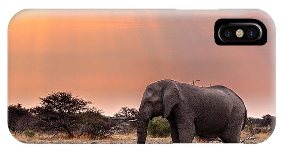 Love IPhone X Case featuring the photograph Portrait Of African Elephants With Dusk by Artush