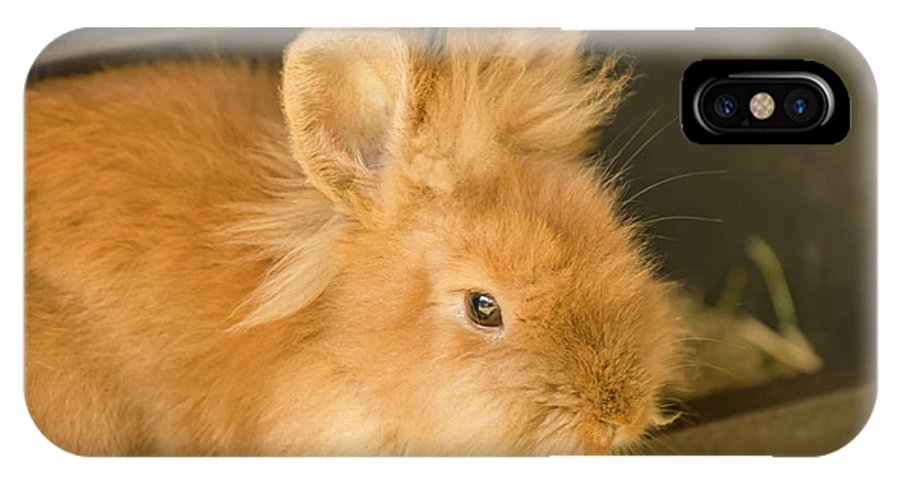 Close-up IPhone X Case featuring the photograph Portrait Of An Icelandic Heritage Breed by Janet Horton