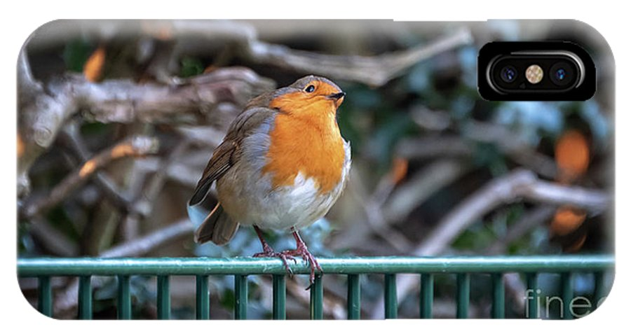 Robin IPhone X Case featuring the photograph Robin Perched On A Rail by Jane Rix
