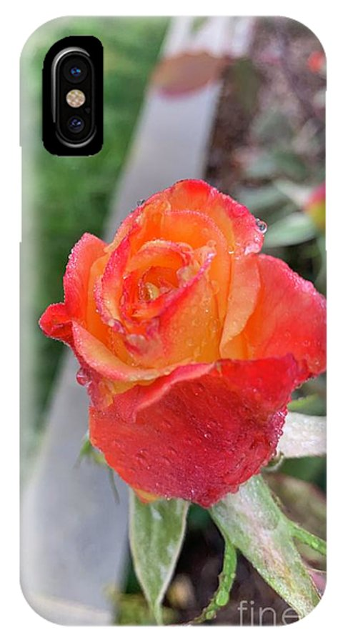Nature Photo IPhone X Case featuring the photograph Single Rose by Epic Luis Art