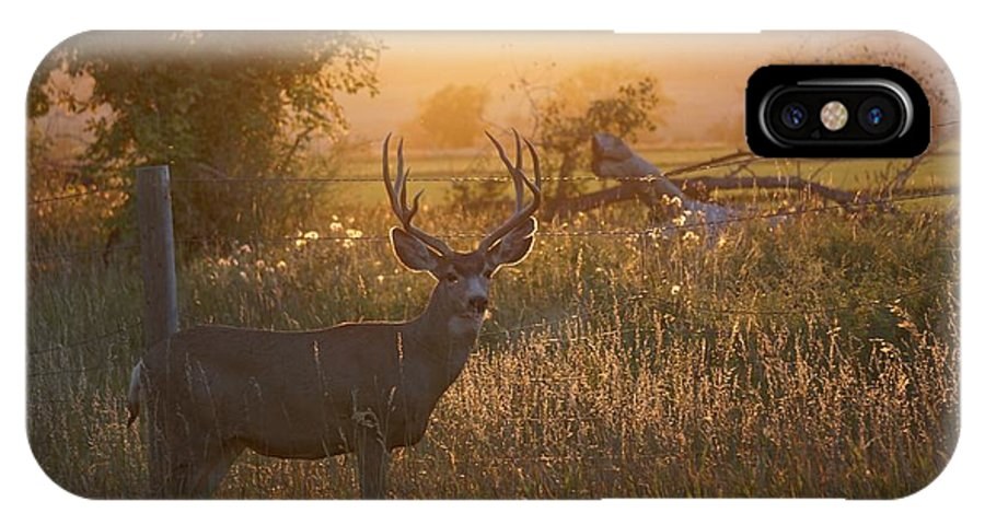 September IPhone X Case featuring the photograph Sunset Deer by Susan Brown