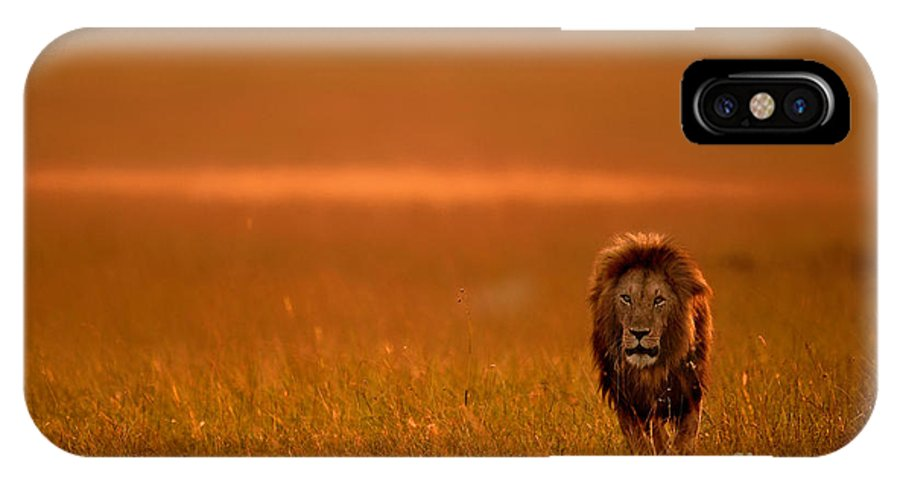 Big IPhone X Case featuring the photograph The Lion King by Varun Aditya