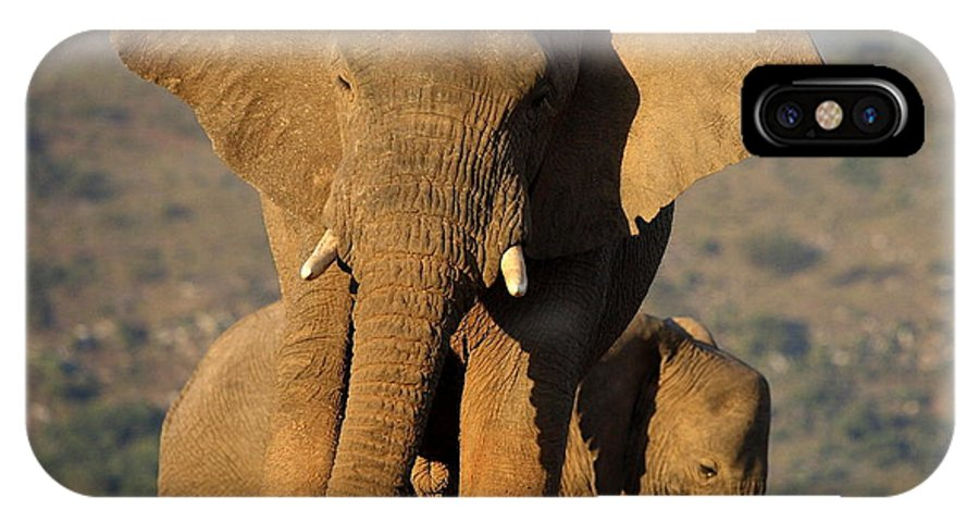 Big IPhone X Case featuring the photograph Two Elephants In Golden Light. Taken On by Jonathan Pledger