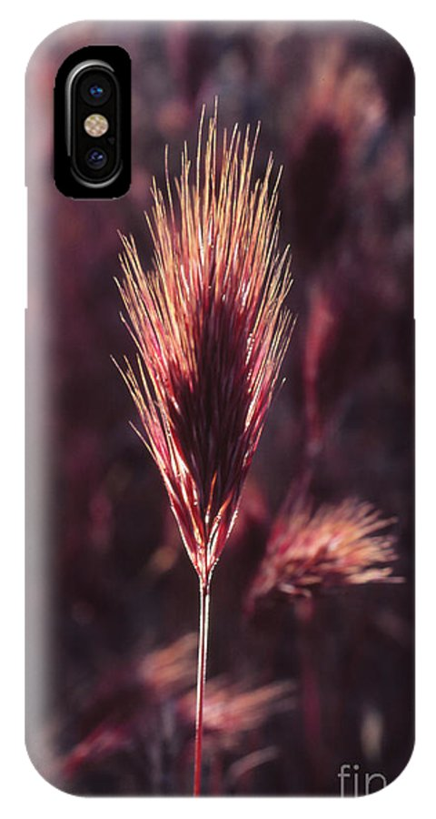 IPhone X Case featuring the photograph Untitled by Randy Oberg