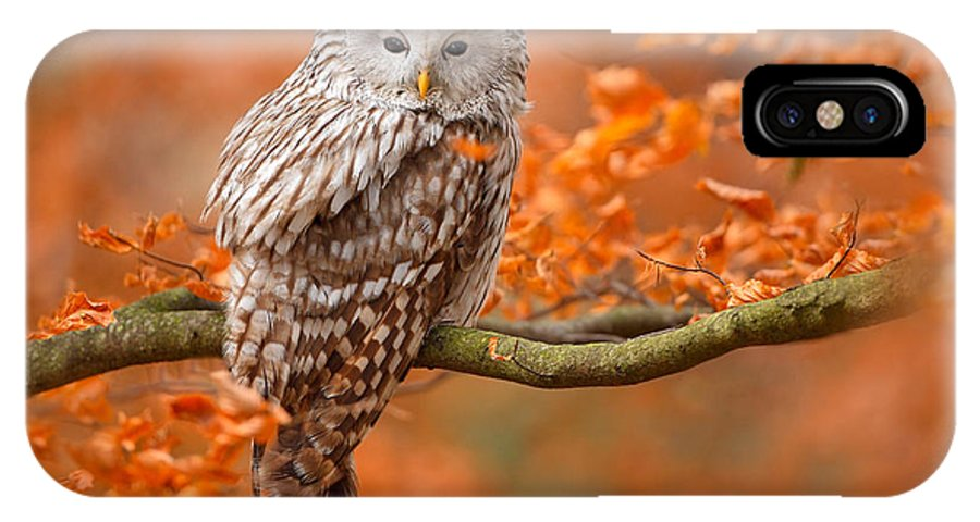 Small IPhone X Case featuring the photograph Ural Owl, Strix Uralensis, Sitting On by Ondrej Prosicky