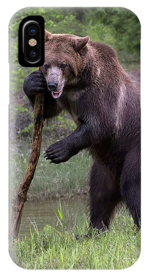 Bear IPhone X Case featuring the photograph Use The Force by Art Cole