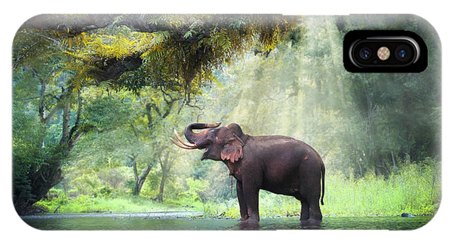 Beam IPhone X Case featuring the photograph Wild Elephant In The Beautiful Forest by Bundit Jonwises