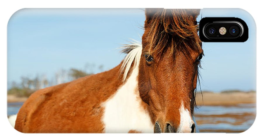 Usa IPhone X Case featuring the photograph Wild Horse At Chincoteague National by Jay Yuan