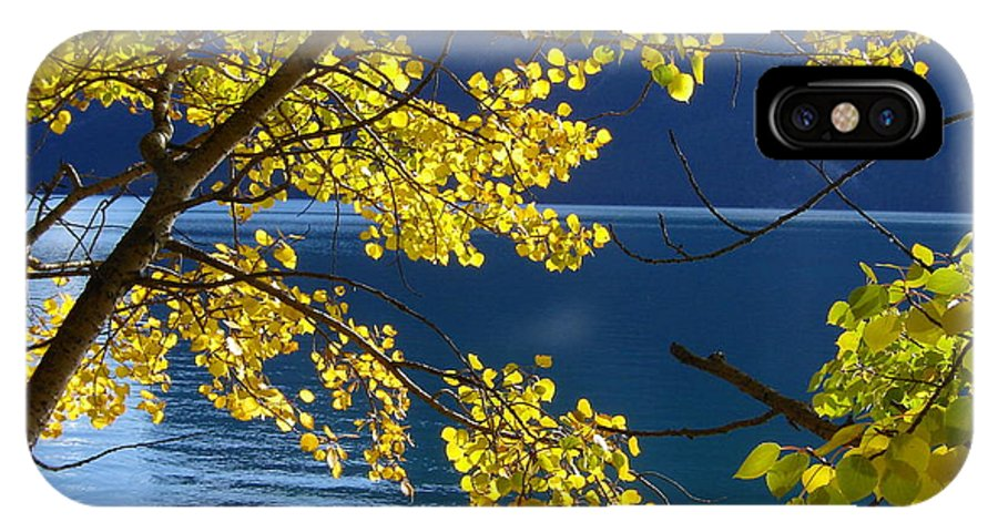 Yellow IPhone X Case featuring the photograph Yellow Leaves by Norman Burnham