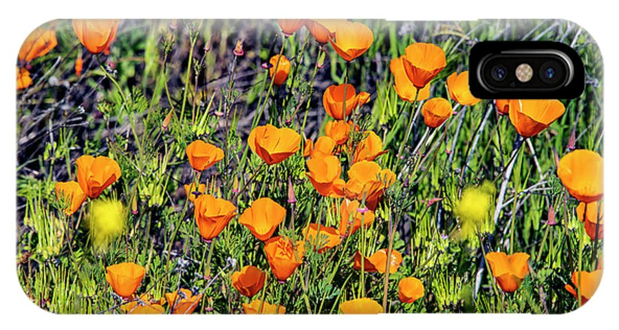 Yellow Poppies Of California IPhone X Case featuring the photograph Yellow Poppies Of California by Mae Wertz