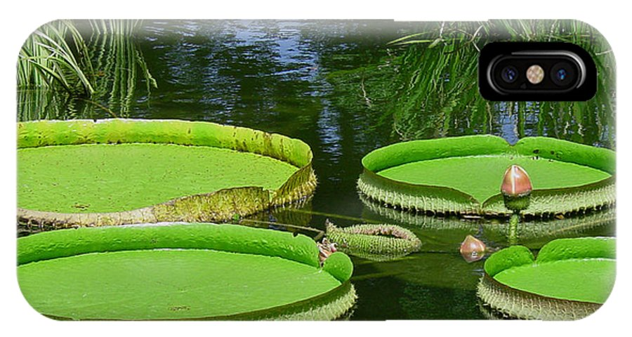 Amazonas Lily Pads IPhone X Case featuring the photograph Amazonas Lily Pads by Suzanne Gaff