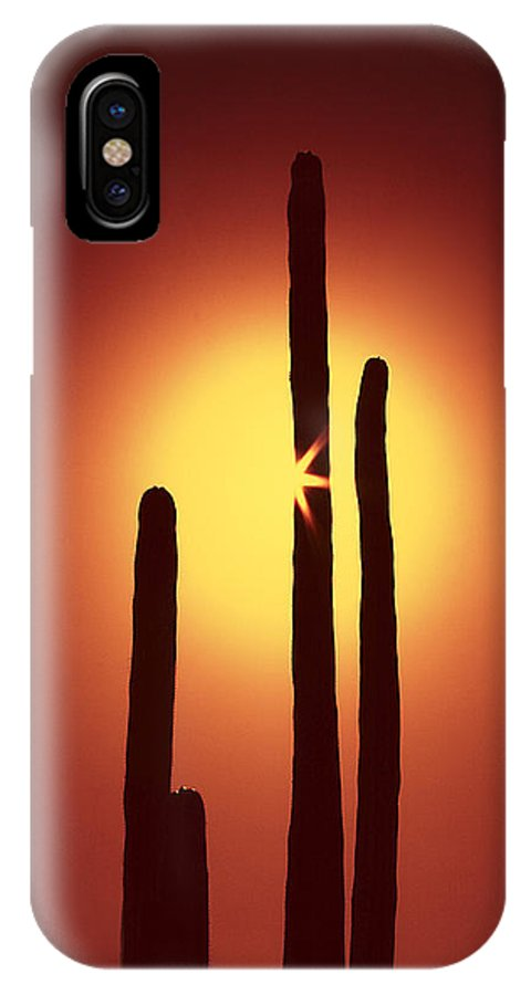 Sun IPhone X Case featuring the photograph Encinitas Cactus by Andre Aleksis