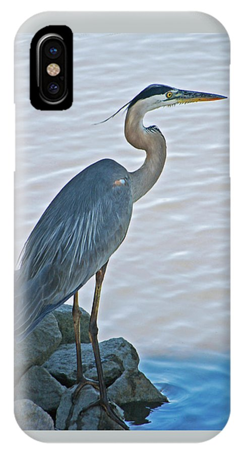 Great Blue Heron IPhone X Case featuring the photograph Great Blue Heron Portrait by Suzanne Gaff