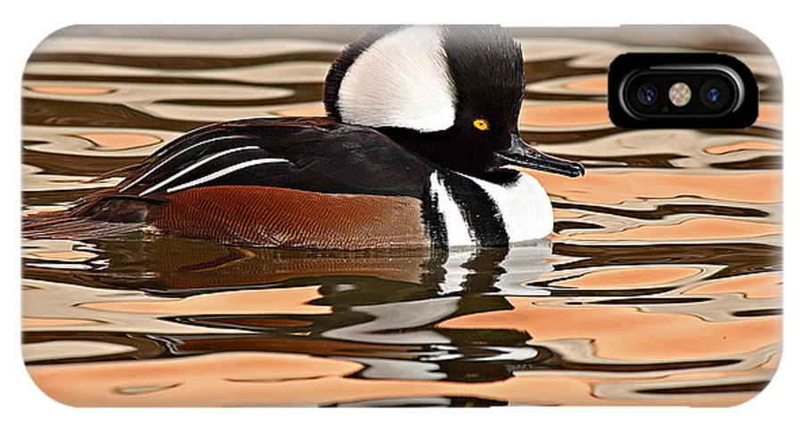 Merganser IPhone X Case featuring the photograph Hooded Merganser On Colorful Water by Max Allen