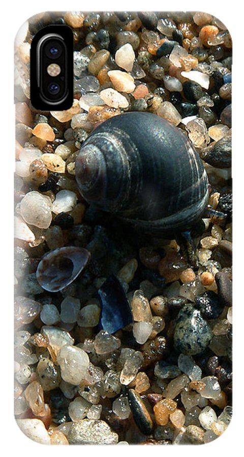 Shells IPhone X Case featuring the photograph In a Grain of Sand by RC DeWinter