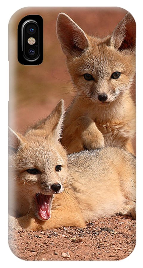 Fox IPhone X Case featuring the photograph Kit Fox Twin Pups by Max Allen