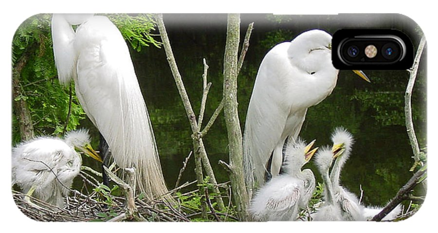 Great White Egret IPhone X Case featuring the photograph Mom n Pop n Chicks by Suzanne Gaff