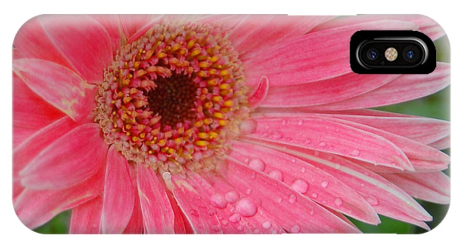 Pink Gerbera IPhone X Case featuring the photograph Pink Gerbera by Suzanne Gaff