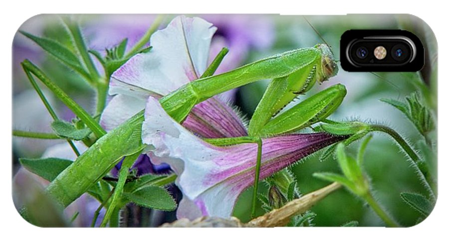 Tennessee IPhone X Case featuring the photograph Praying Mantis Hidden among the Petunias by Douglas Barnett