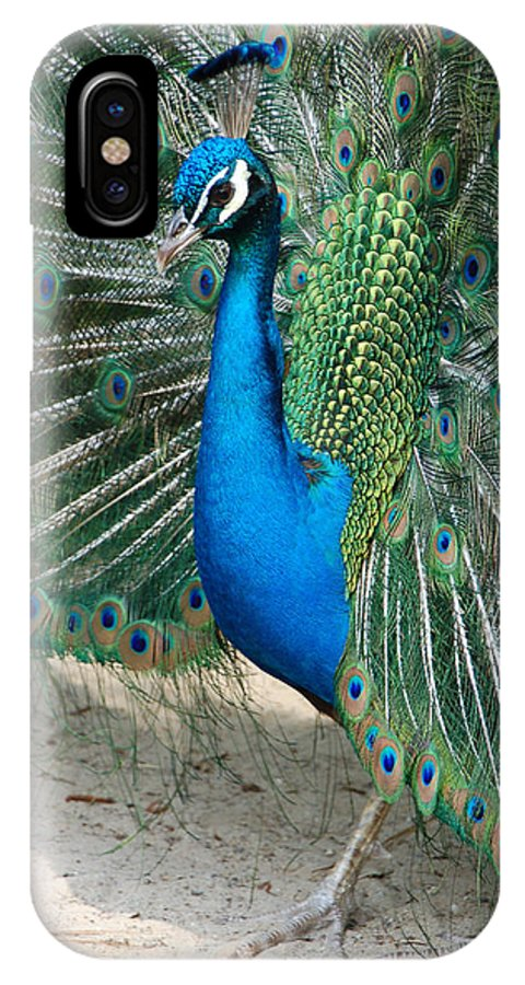 Peacock IPhone X Case featuring the photograph Profilin' by Suzanne Gaff