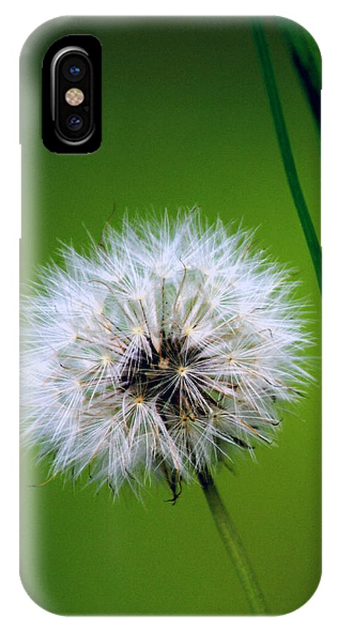 Dandelion IPhone X Case featuring the photograph Waiting for the Winds of Deliverance by Holly Kempe