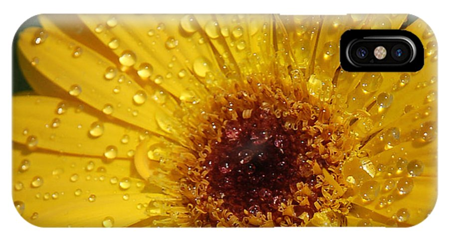 Yellow IPhone X Case featuring the photograph Yellow Gerbera by Suzanne Gaff