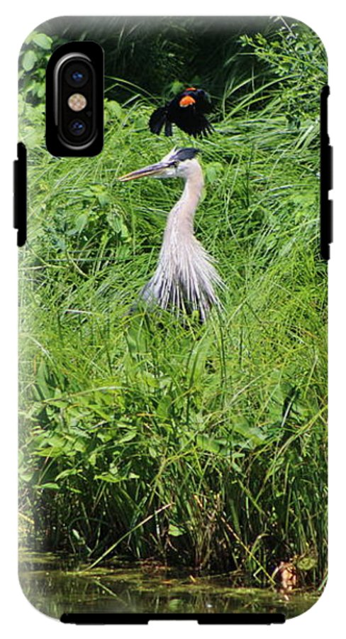 Marsh IPhone X Tough Case featuring the photograph Annoyed - Heron and Red Winged Blackbird 8 of 10 by Colleen Cornelius