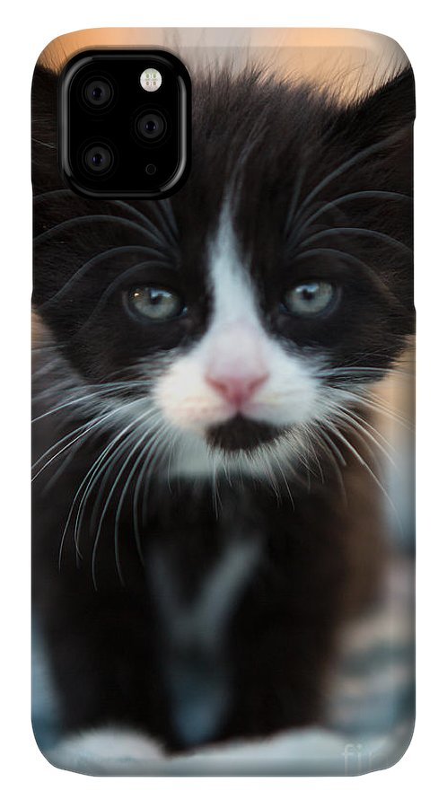 Kitten IPhone Case featuring the photograph Black and white Kitten by Iris Richardson