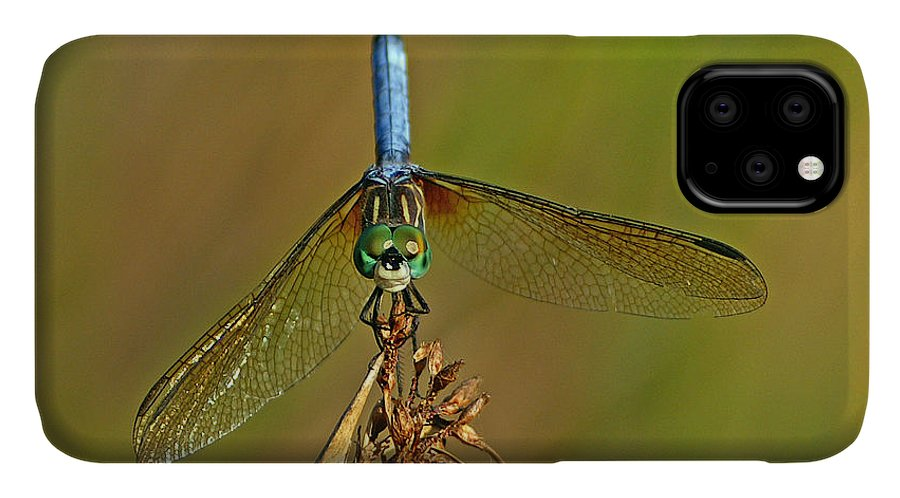 Dragonfly IPhone Case featuring the photograph Blue Dasher by Bill Morgenstern