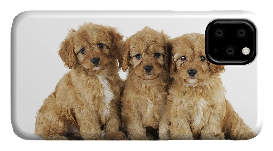 Dog IPhone Case featuring the photograph Cockapoo Puppy Dogs by John Daniels