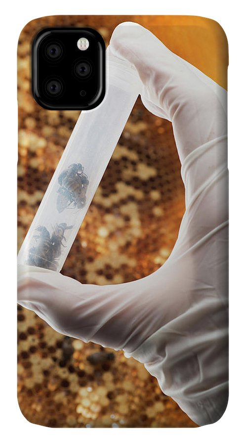 Honey Bee IPhone Case featuring the photograph Honey Bee Research by Pan Xunbin