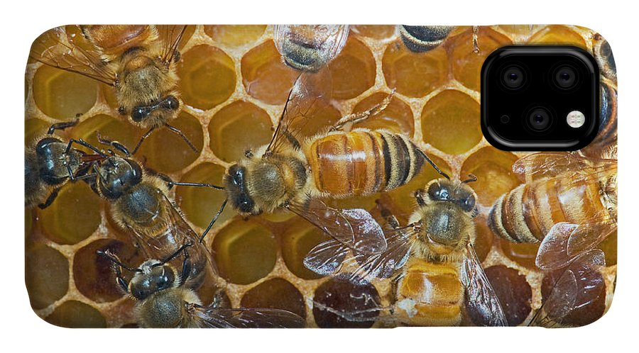 Insect IPhone Case featuring the photograph Honey Bees In Hive by Millard H. Sharp
