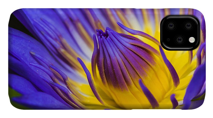 Water Lilly Purple Floral Water Pond IPhone 11 Case featuring the photograph Lilly by James Roemmling