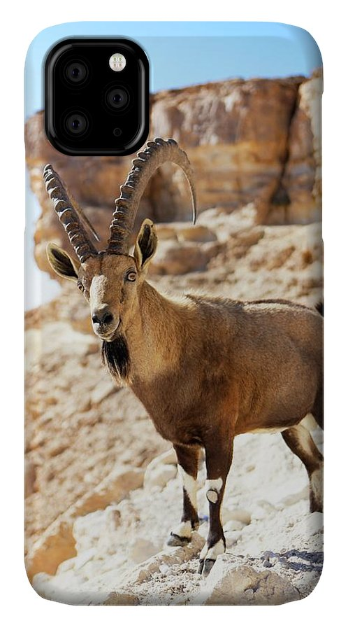Animal IPhone Case featuring the photograph Male Nubian Ibex by Photostock-israel