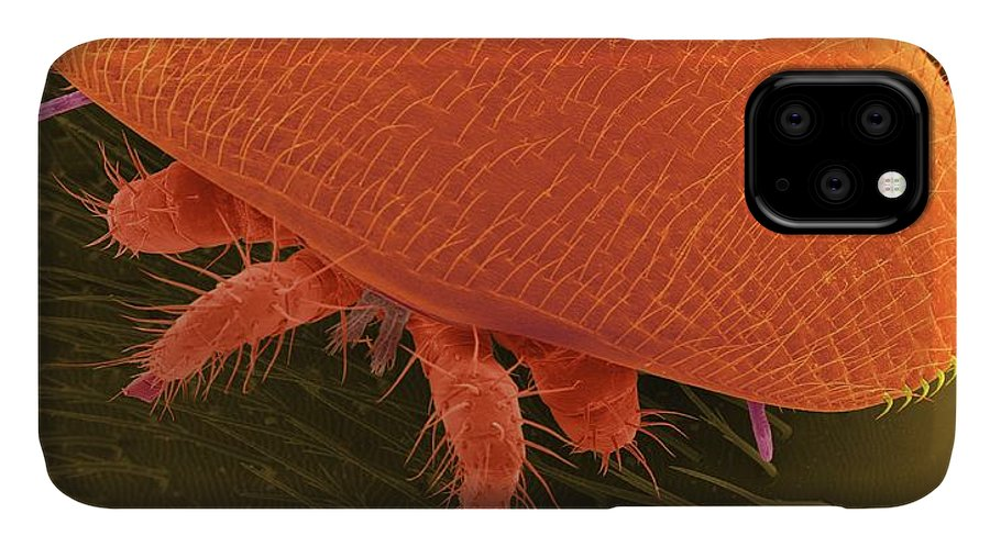 Arachnid IPhone Case featuring the photograph Varroa Bee Mite (varroa Destructor) by Dennis Kunkel Microscopy/science Photo Library