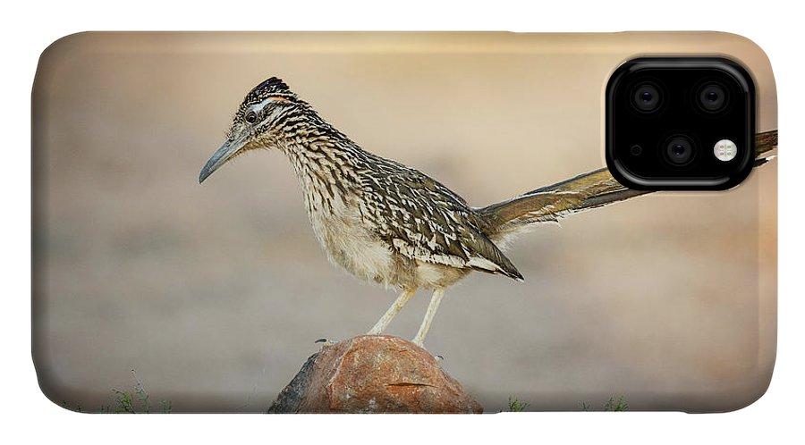 Arizona IPhone 11 Case featuring the photograph Usa, Arizona, Santa Rita Mountains by Jaynes Gallery