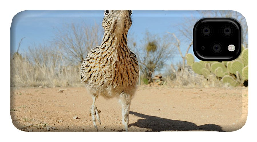 Greater Roadrunner IPhone 11 Case featuring the photograph Greater Roadrunner by Scott Linstead