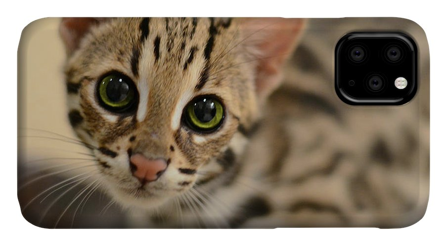 Animals IPhone Case featuring the photograph Asian Leopard Cub by Laura Fasulo