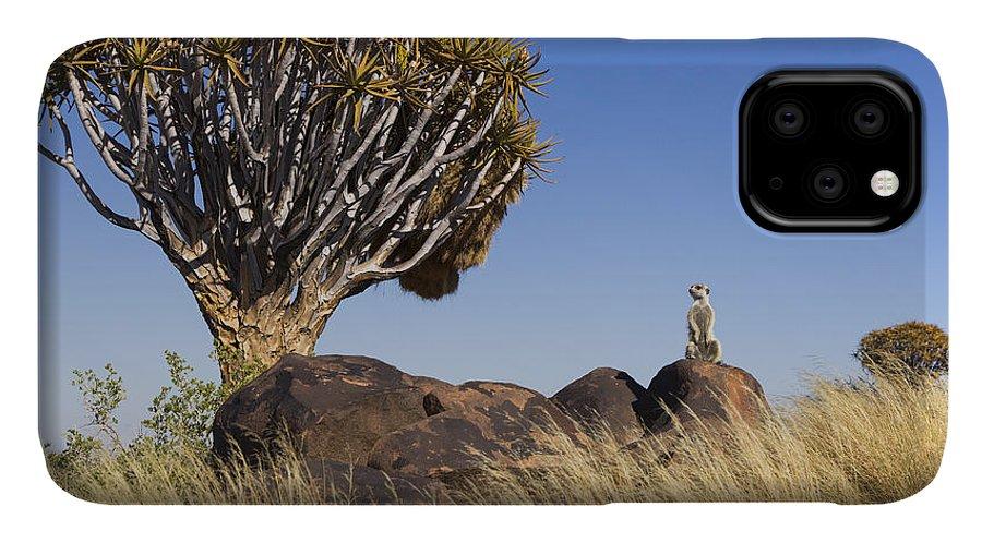 Vincent Grafhorst IPhone 11 Case featuring the photograph Meerkat In Quiver Tree Grassland by Vincent Grafhorst