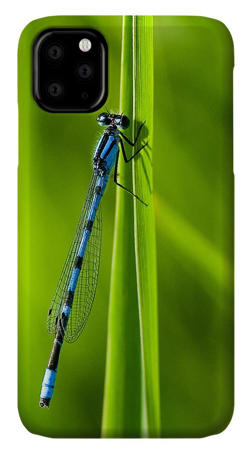 Damselfly IPhone Case featuring the photograph Hagen's Bluet by Bill Morgenstern