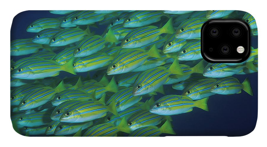 Fish IPhone 11 Case featuring the photograph Indonesia, Komodo National Park by Jaynes Gallery