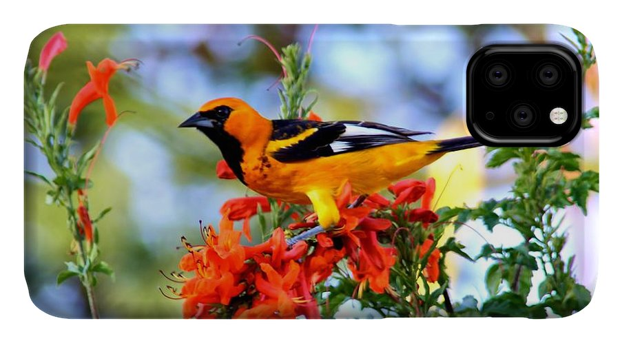 Birds IPhone Case featuring the photograph Spot-Breasted Oriole by Dart and Suze Humeston