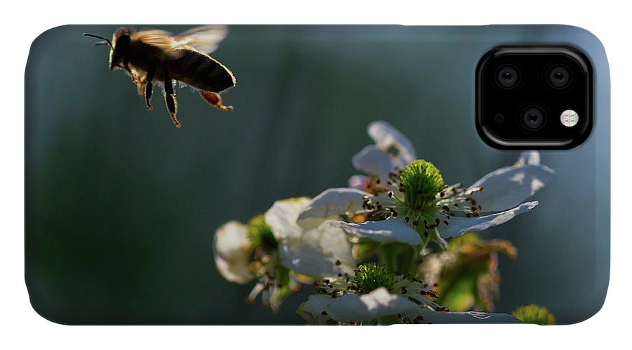 Bee IPhone Case featuring the photograph A Domestic Honeybee Pollinates by Coke Whitworth